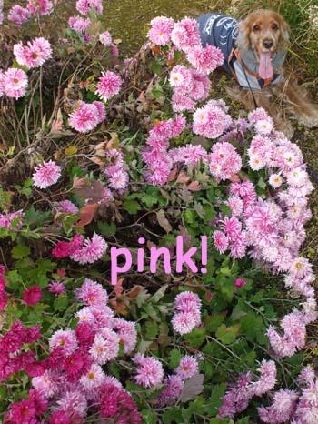 大好きな色ピンクゾーン