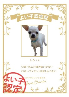 certification_0d6966a6.jpg