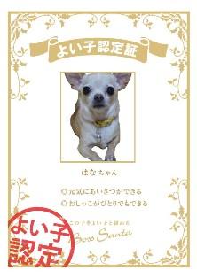 certification_c011dd5d.jpg