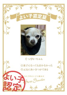 certification_cd0dae33.jpg