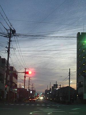 朝の街路樹