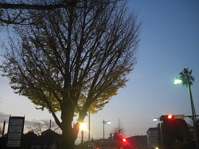 市役所の木