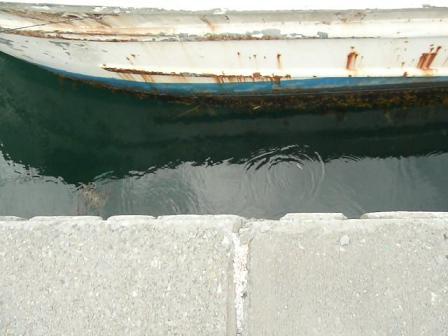船の間にたくさん居るけど写真に写ってなくてゴメン。