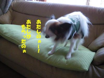 IMGP0994_convert_20091024230643.jpg