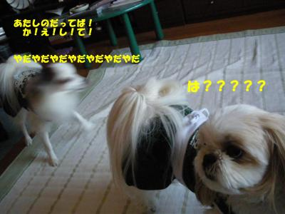 IMGP0996_convert_20091024230717.jpg