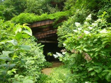善知鳥前隧道25