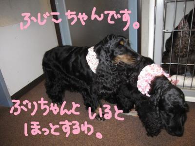 100727-fuji1.jpg