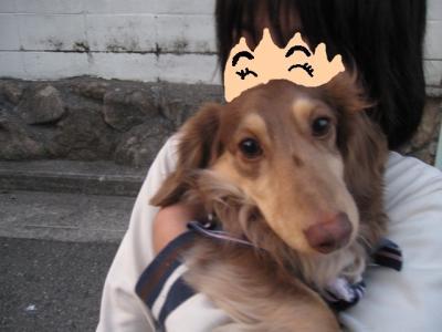 yukaちゃんちのワンちゃん