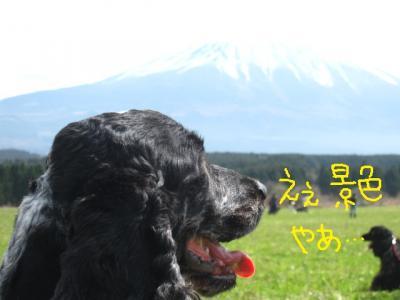 富士をみる