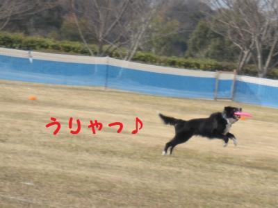 Xキャッチ!2