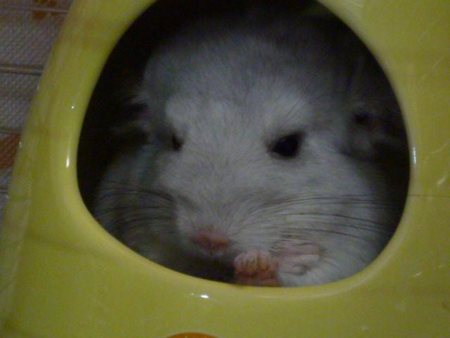 やっぱり ネズミ!