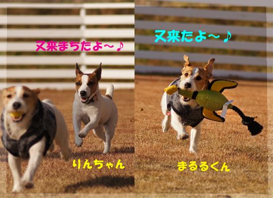 4_20101229230954.jpg