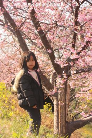 桜咲く木の下で