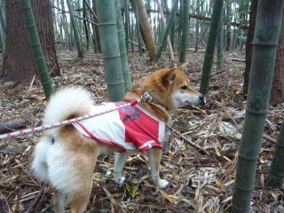竹の子堀り