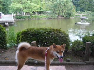 薬師池公園♪