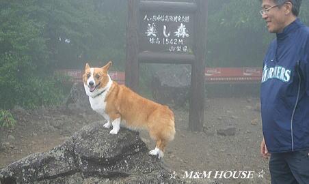 野辺山15