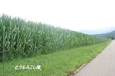野辺山30