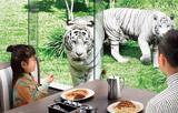 animal_p13.jpg