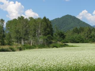 蕎麦畑(開田高原)