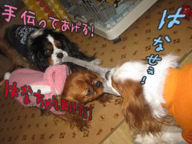 0131c_20110131234606.jpg