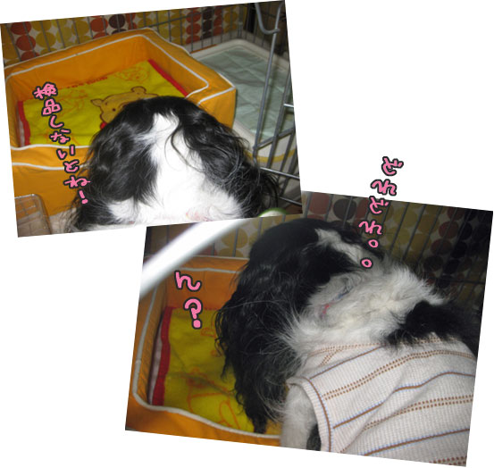 1004c_20101006225536.jpg