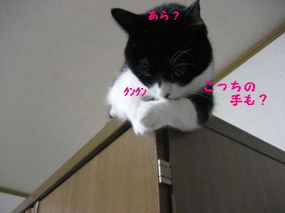 IMG_6910_20091021145102.jpg