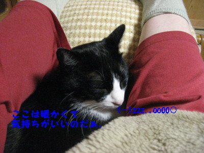 IMG_7012_20091023104906.jpg