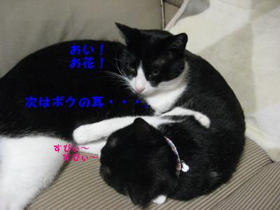 IMG_7156_20091102105252.jpg