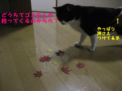 IMG_7239_20091104131255.jpg
