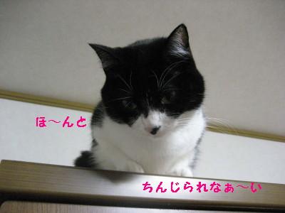 IMG_7242_20091109103718.jpg