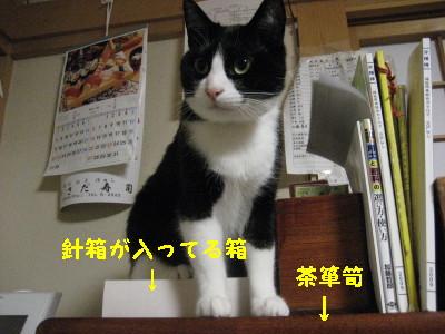 IMG_7277.jpg