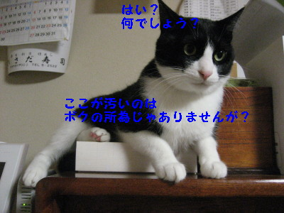 IMG_7282.jpg
