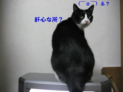 IMG_7386.jpg