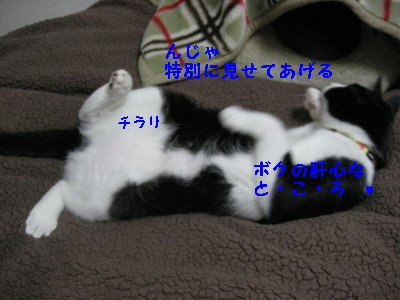 IMG_7396.jpg