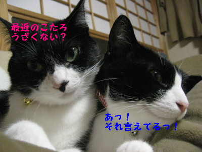 IMG_7465.jpg