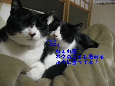 IMG_7723_20091204121732.jpg