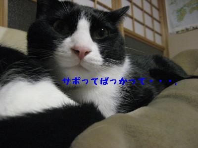 IMG_7731_20091204121825.jpg