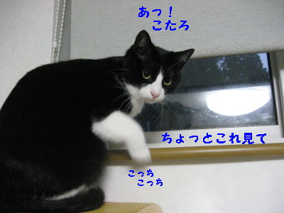 IMG_7867.jpg