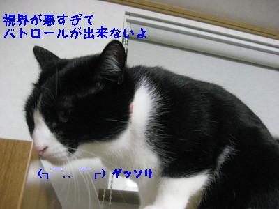 IMG_7870.jpg