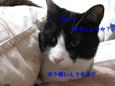 IMG_8106_20100129092757.jpg