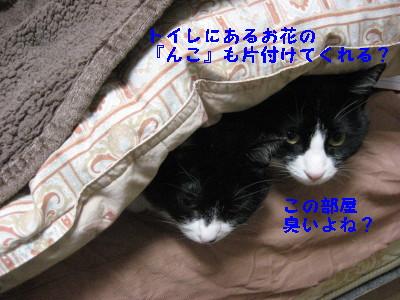 IMG_8160.jpg