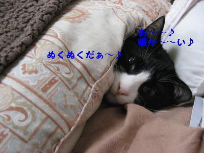 IMG_8165.jpg