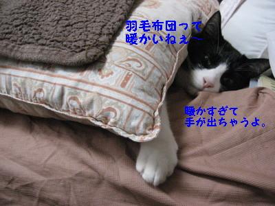 IMG_8181.jpg