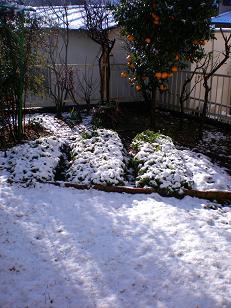 我が家の雪景色(^^;)