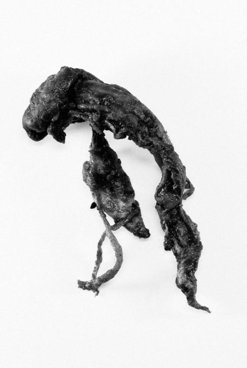 319-1.jpg