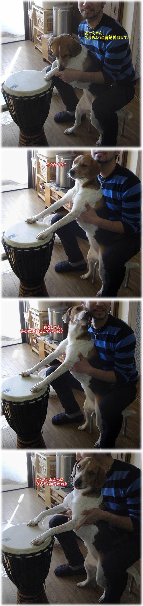 10ジャンベ犬