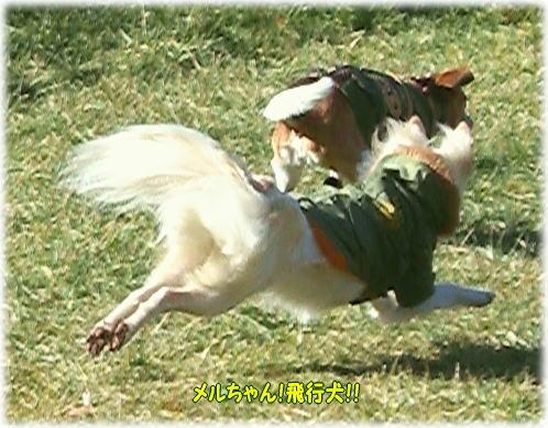 11飛行犬