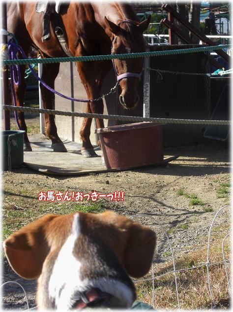 26お馬さん