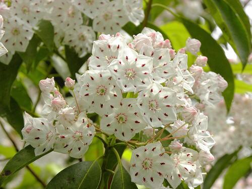 1可愛い花