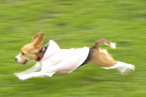 1ビッケ飛行犬